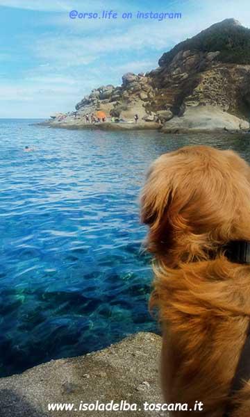 il blog dell\'Isola d\'Elba, tanti consigli per scoprire e visitare ...